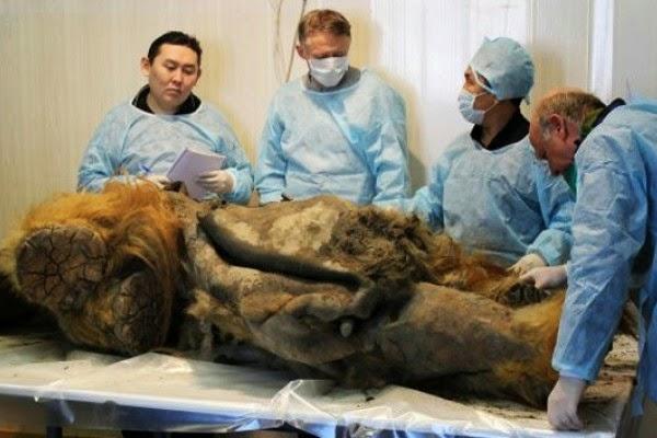 Científicos, a un paso de clonar el primer mamut de la historia Mamut+historia