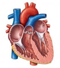 7 Kebiasaan buruk yang dapat merusak jantung