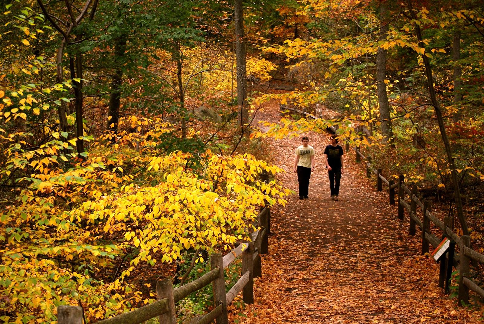 NYC ♥ NYC: Autumn Foliage at the New York Botanical Garden