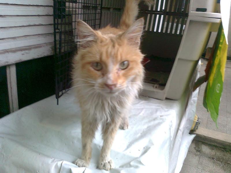 Adopta tu mascota steven el gato de gendarmeria 1 mes rosario - Cuidados gato 1 mes ...