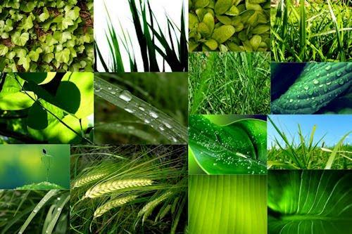 Vegetación - Imágenes verdes - 15 fotos de la naturaleza