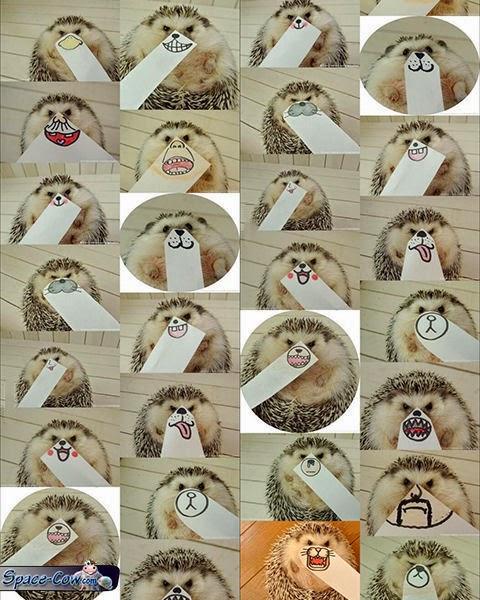 funny cute hedgehog pics
