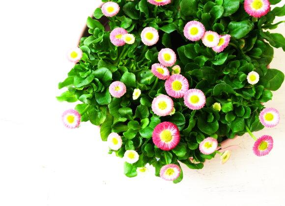 Blumengrüsse
