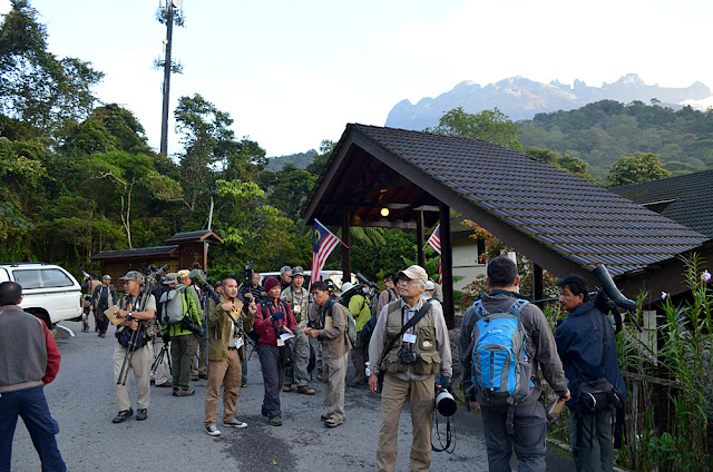 Birding Kinabalu National Park