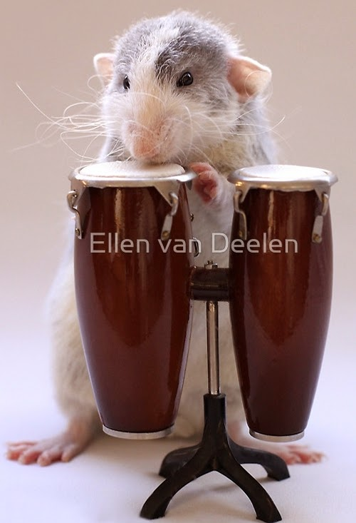 12-The-Percussionist-2-Musical-Dumbo-Rat-Ellen-Van-Deelen-www-designstack-co