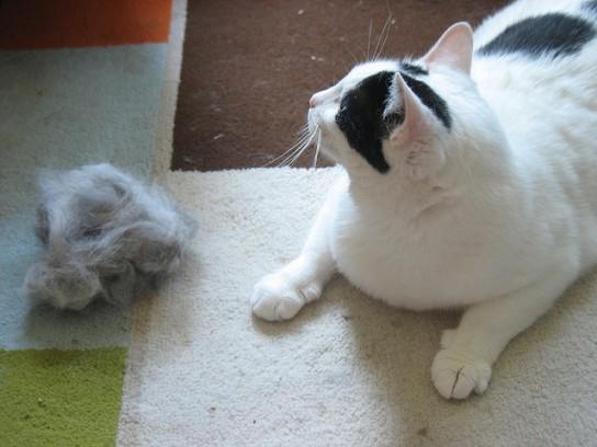 25 maneras de eliminar los pelos de gato en casa - Como quitar los pelos de perro de la ropa ...