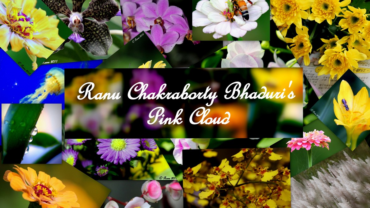 Ranu Chakraborty Bhaduri&#39;s Pink Cloud