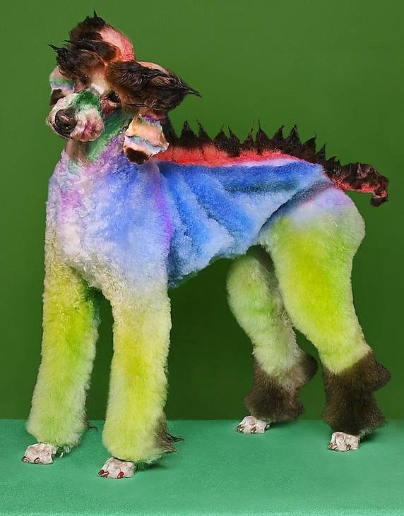 verdens sjoveste hund