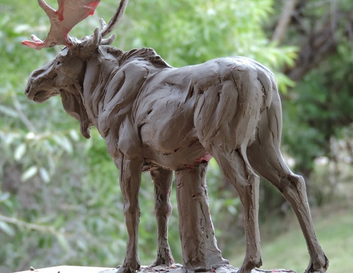 Moose Skeleton Anatomy Lektonfo