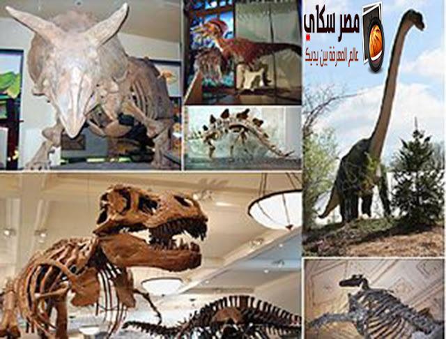 أمثلة لبعض أنواع الحيوانات المنقرضة قديما وحديثا Extinct species