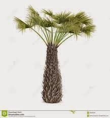 56 Kentia Artificial Palm Tree in White Planter with