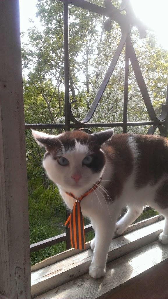 Вежливый кот 4