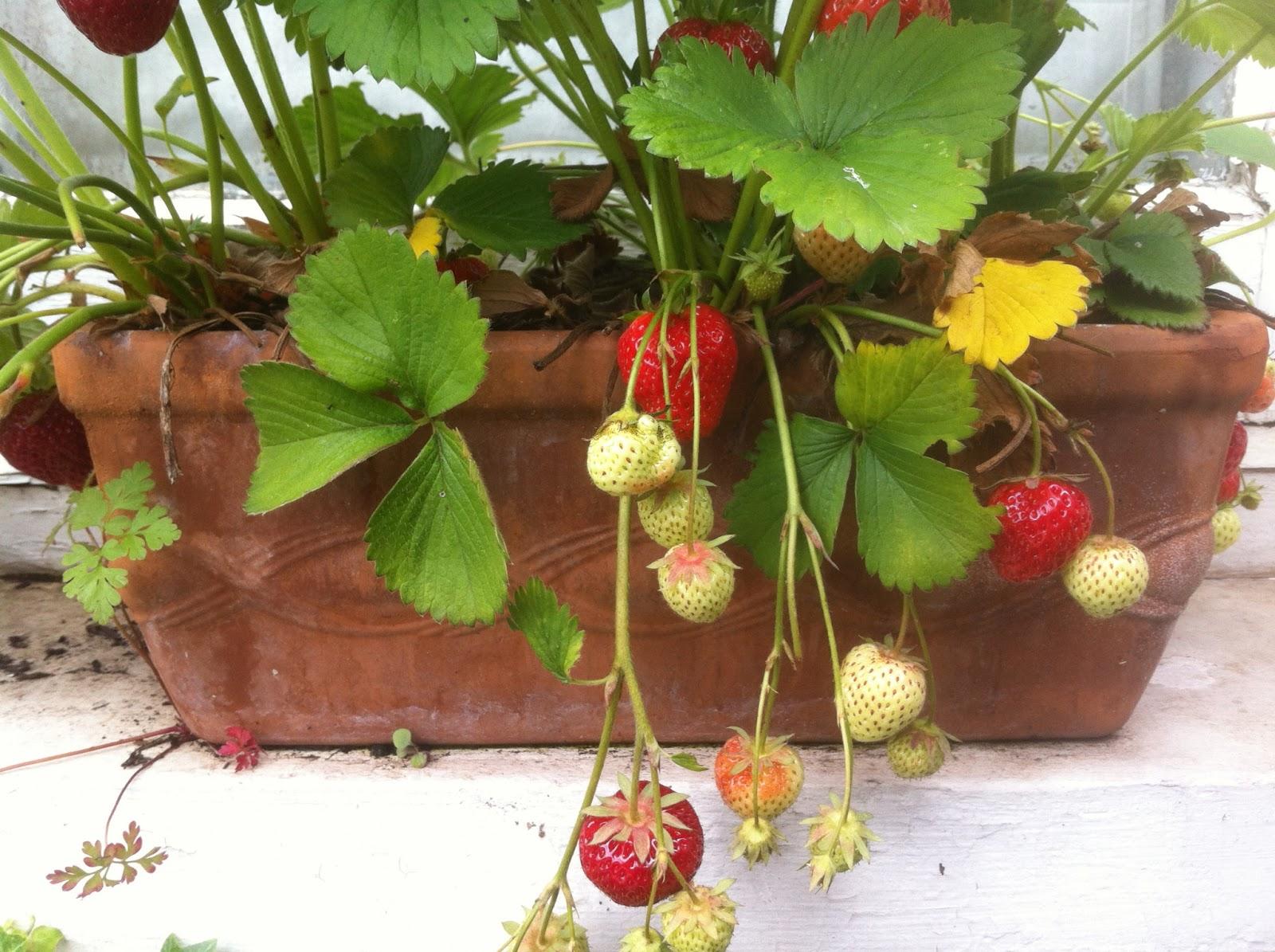 Local Ecologist: Window Box Garden: Melissa Harrison