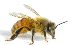 Mierea: ghid de utilizare pentru beneficii maxime