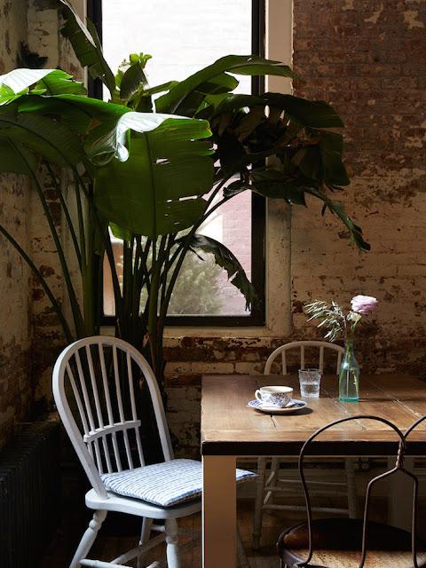Rincón plantas