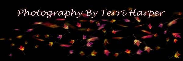 Photography by Terri Harper