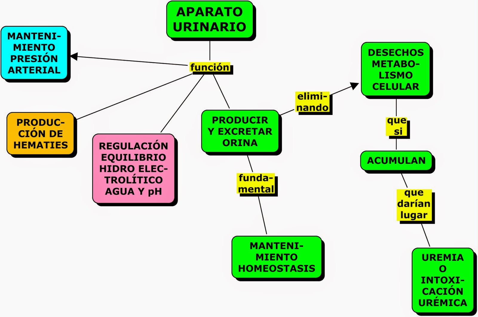 MAPAS CONCEPTUALES SOBRE EL APARATO URINARIO | MAPAS CONCEPTUALES ...