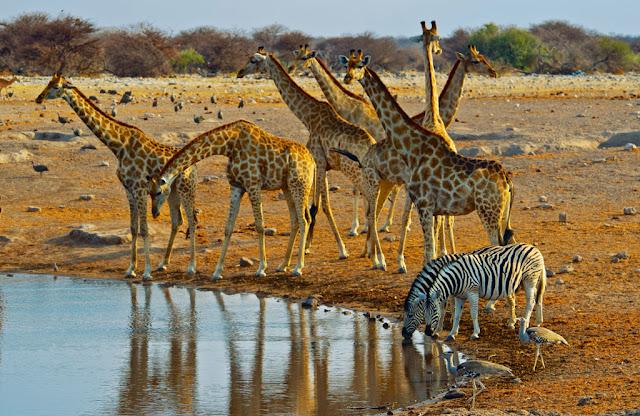 Africa con niños