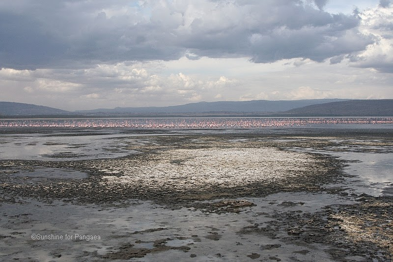 Shoreline of the lake nakuru