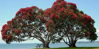 NZ POHUTUKAWA