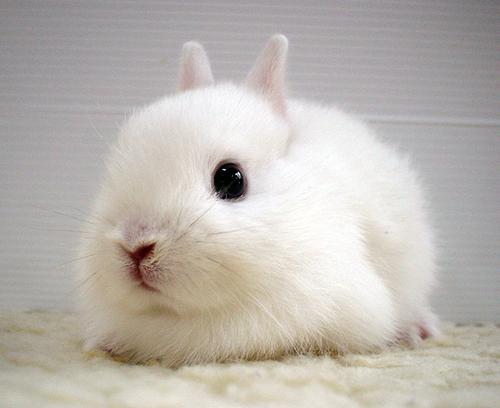 foto de coelho fofo