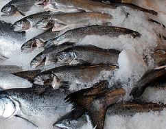 organic food fish
