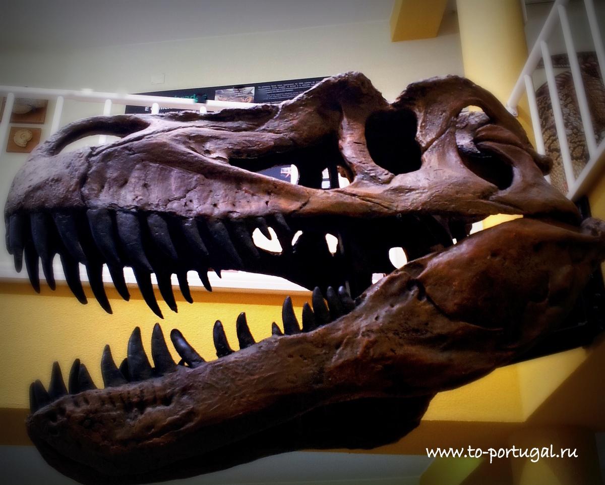 следы динозавров в Португалии