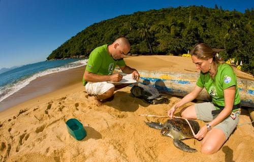 Projeto Tamar - Preservação das tartarugas marinhas