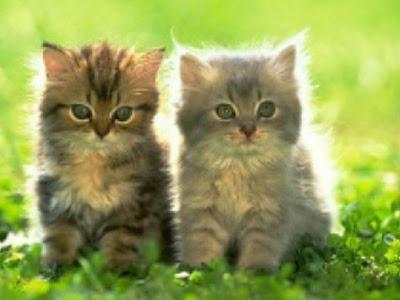 Umur berapa anak kucing paling baik untuk diadopsi???