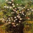 'Roser en flor (Vincent Van Gogh)'