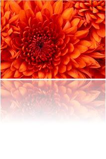 efek refleksi pada gambar di blog