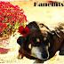 Κανελλίτσα, μία μικρόσωμη σκυλίτσα προς αναζήτηση οικογένειας...