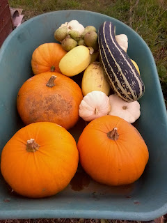Pumpkins and spaghetti squash