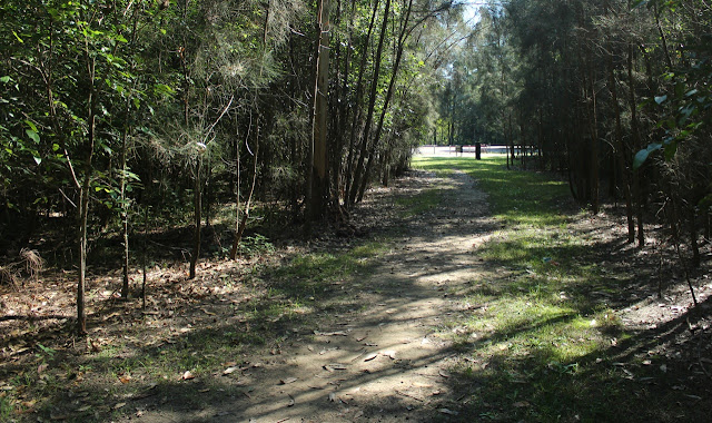 Final section of Carawah Reserve walk
