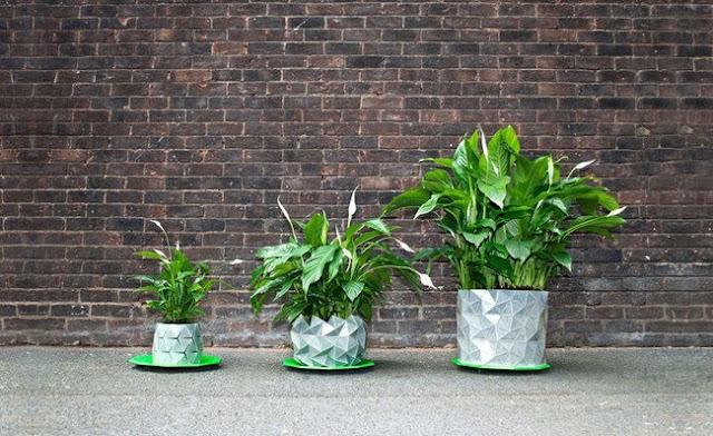 وعاء يكبر مع نمو النبات