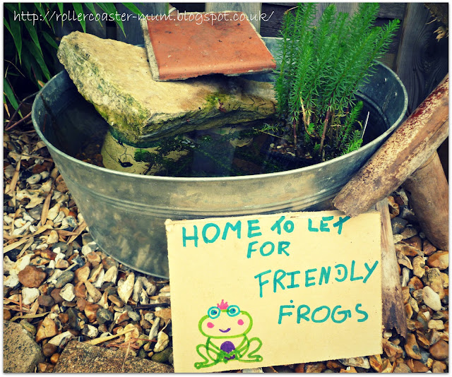 Our mini pond #homesfornature RSPB