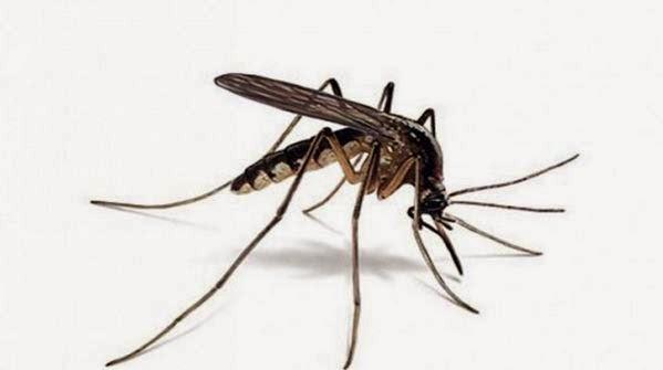 Rahsia Nyamuk Suka Terbang Keliling Kepala Kita