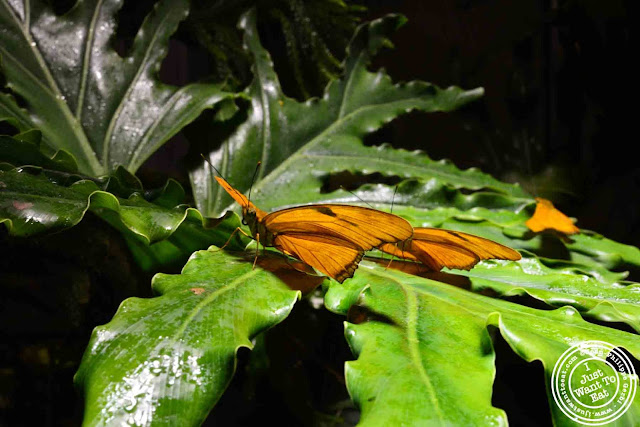 Image of Butterflies at the Museum of Natural History, NYC, New York