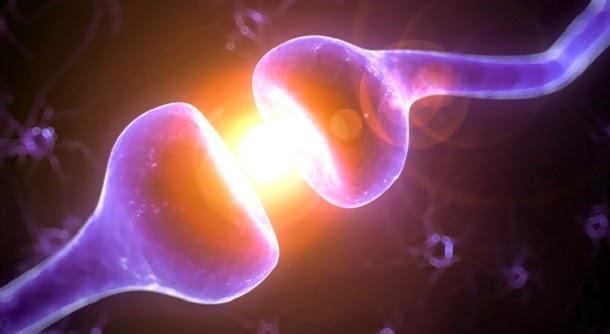 Descoberto gene que pode aumentar o QI em 6 pontos