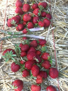 Strawberries & Asparagus 06-07-13