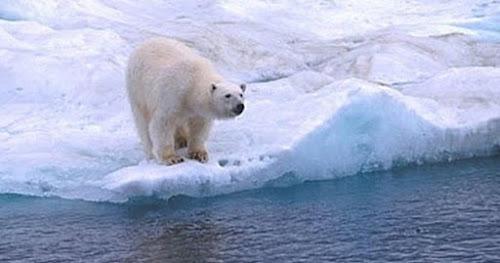 10 Histórias Incríveis de Sobrevivência no Ártico