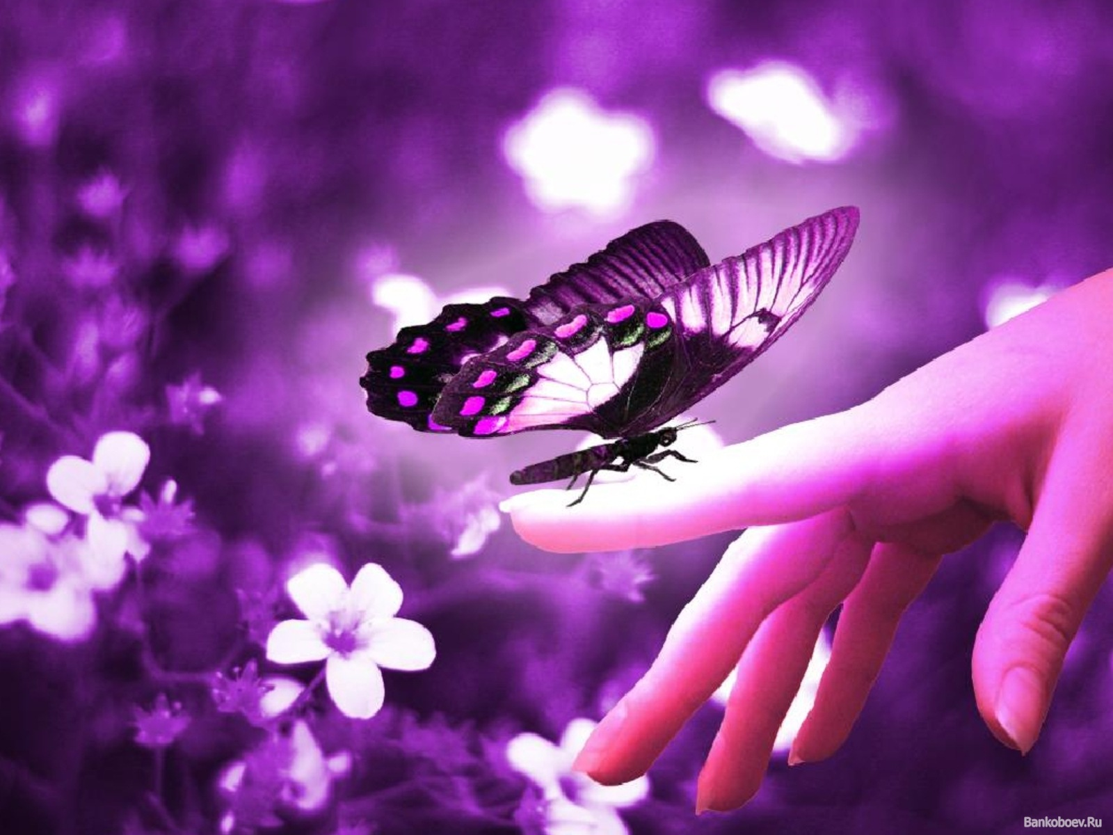 Cute Butterfly in Purple - Computer Screen Saver. PC ...