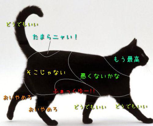 猫 触る ポイント 喜ぶ 嫌い 場所
