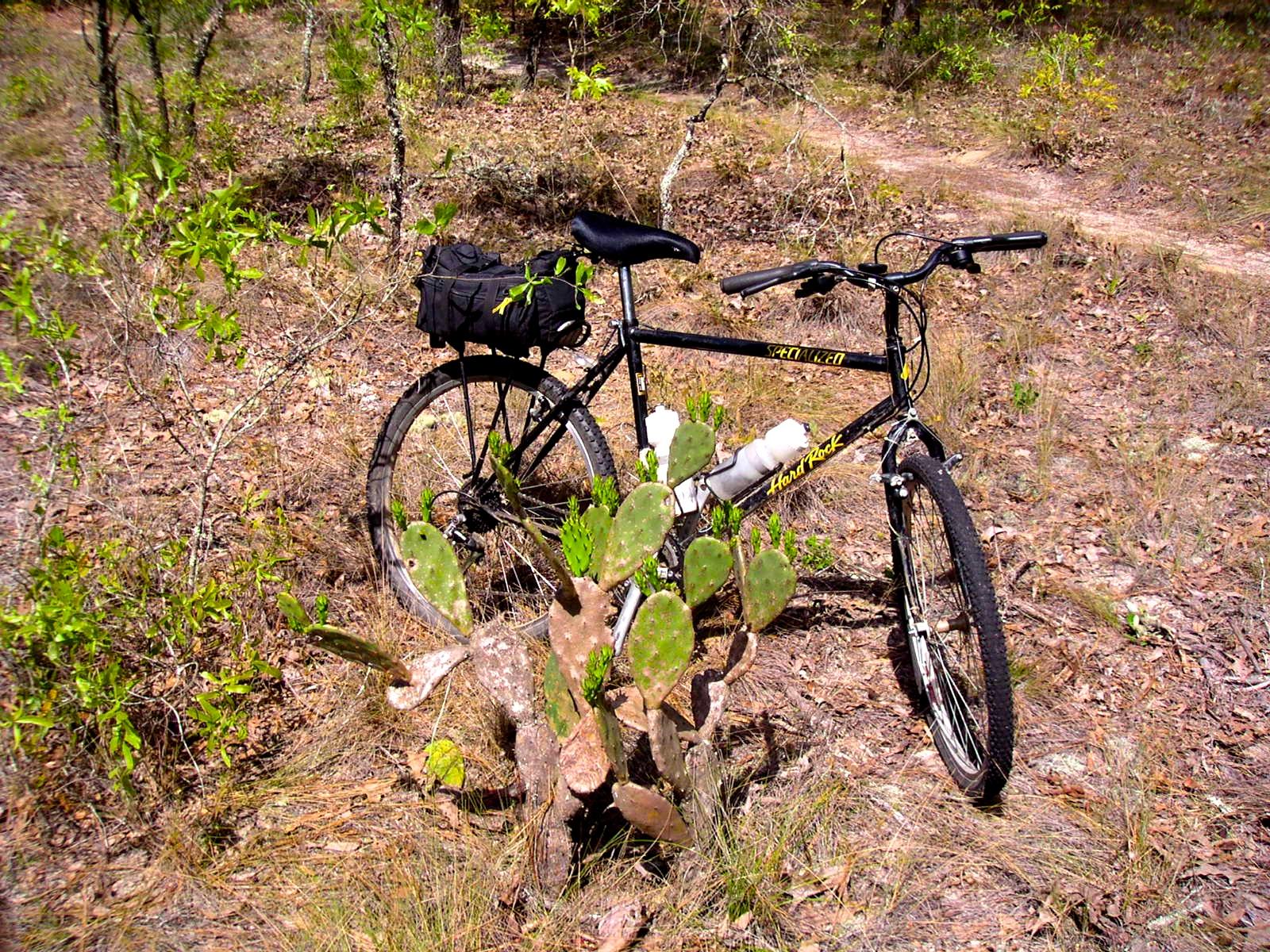 Chuck S Adventures Biking Florida S Paisley Woods Mountain Bike Trail