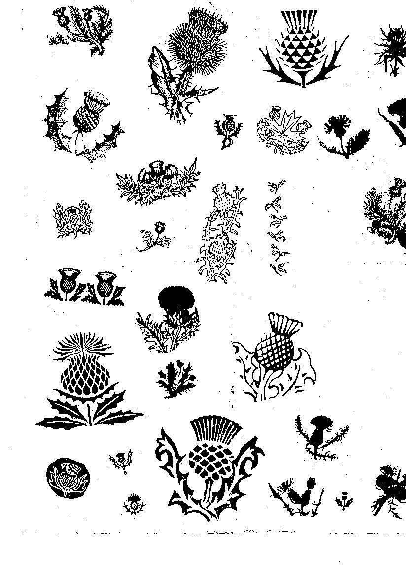 scottish thistle tattoo black and white eyecatchingtattoos scottish thistle pinterest. Black Bedroom Furniture Sets. Home Design Ideas