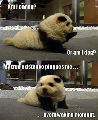Am I a Panda or a Dog My true existence plagues me