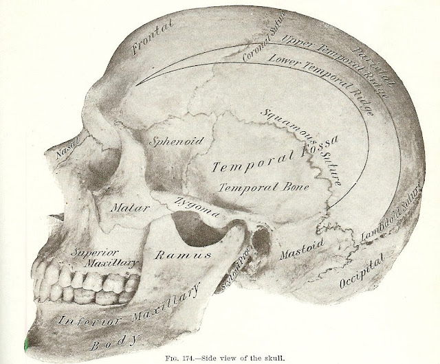 Antique Halloween skeleton graphics printables Gray's Anatomy | www.knickoftime.net