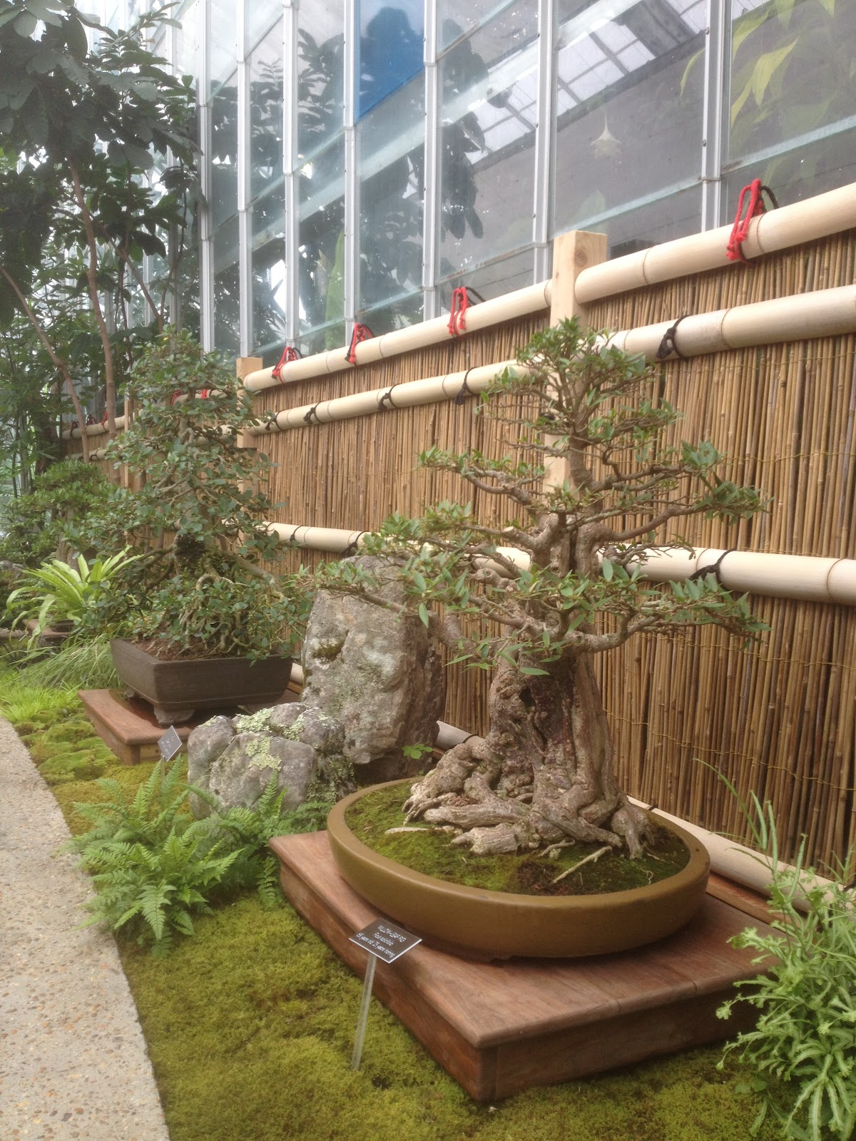 Bamboo Geek: On most gardener\'s bucket list... U.S. Botanic Gardens ...