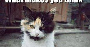 Image Drôle du Net: Image drôle d'animaux avec texte