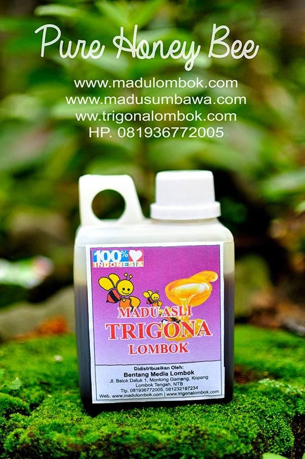 harga-madu-asli-trigona-lombok